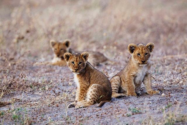 Nomad Africa Adventure Overland Big 5 Kruger Park